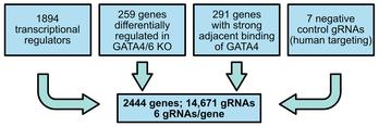 Mouse AAV CRISPR Knockout Library targeting cardiac transcriptional regulators