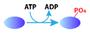 human-kinase-icon.jpg