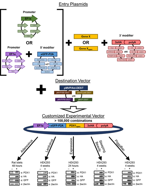 pMVP (plasmid-based modular vector platform) overview
