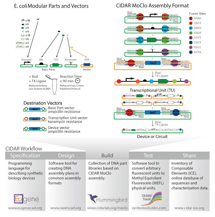 Kit assembly workflow diagram