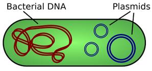 bacterial dna cartoon