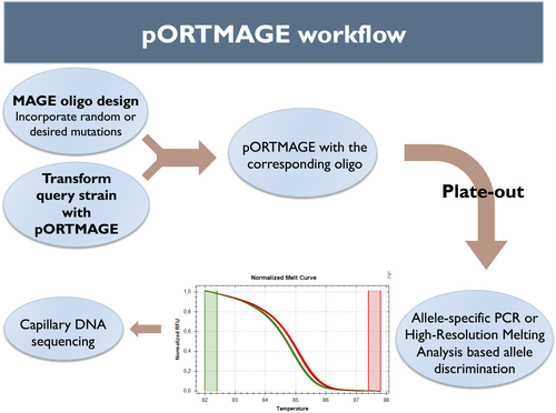 3_11_2016 Portmage Workflow.png