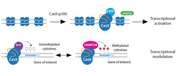 CRISPR-epigenetics-horizontal.png