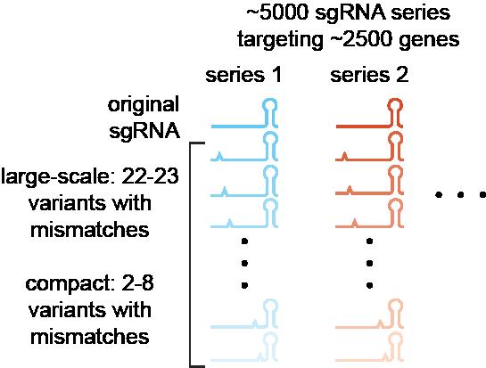 Weissman Lab Mismatched sgRNA Titration Libraries