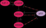 p53 pathway icon
