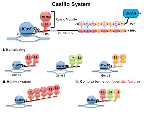 Casilio schematic