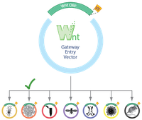 Waterman-Open-Source-Wnt-Schematic_1.png