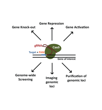 CRISPR image of different functions