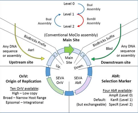 Joint Universal Modular Plasmids