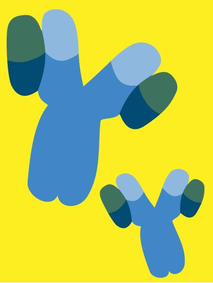 decorative antibodies