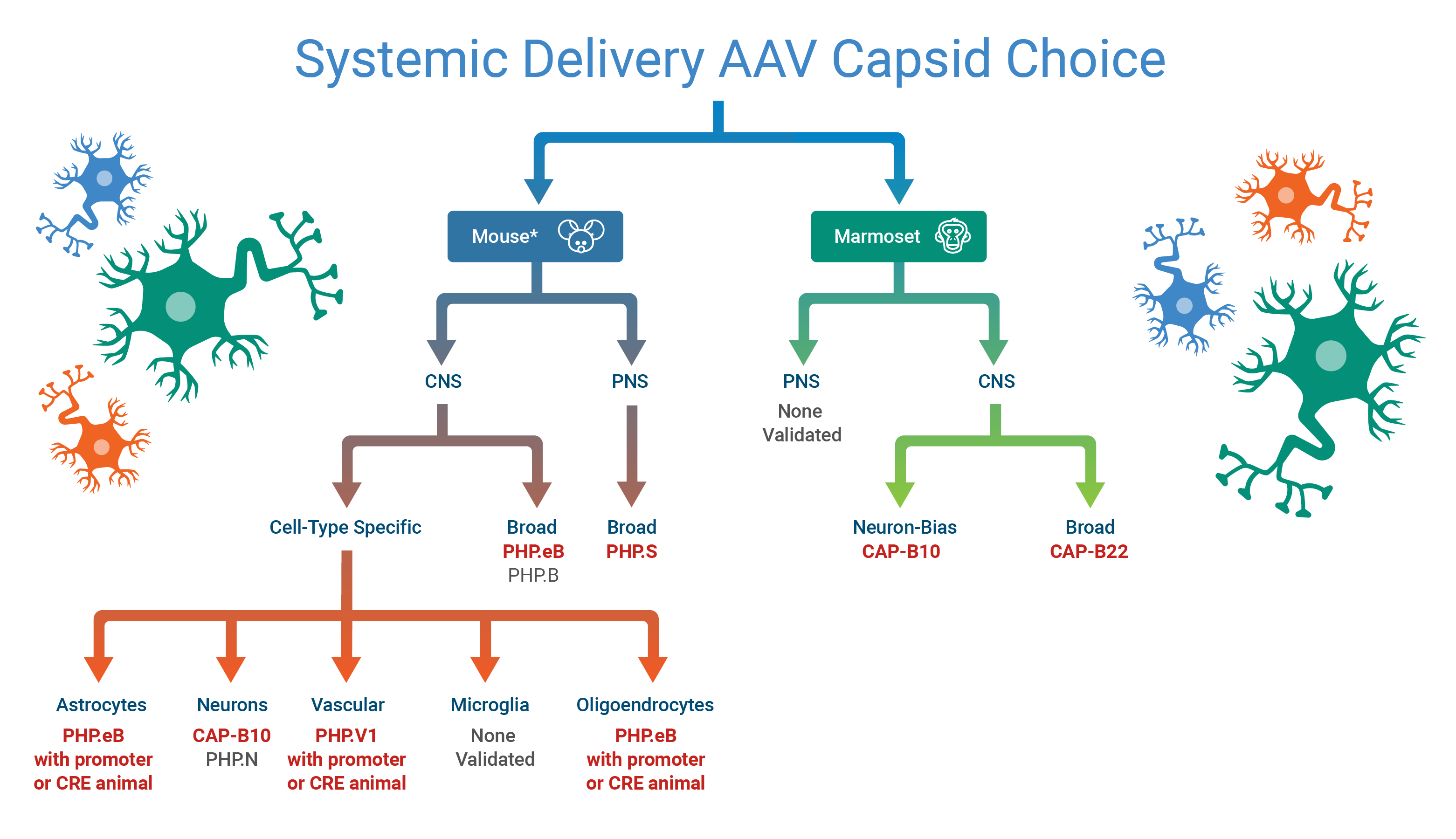 AAV decision tree. Described under the heading Text Description for the AAV Decision Tree