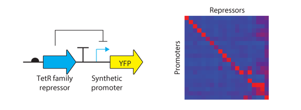 Voigt Lab Repressors for Orthogonal Logic Gates