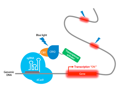 Moritoshi Sato CRISPR optogenetics tool