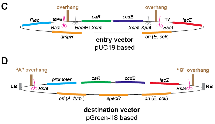 Illustration of GreenGate entry and destination vectors