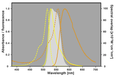 Spectral properties of mVenus and tagRFP