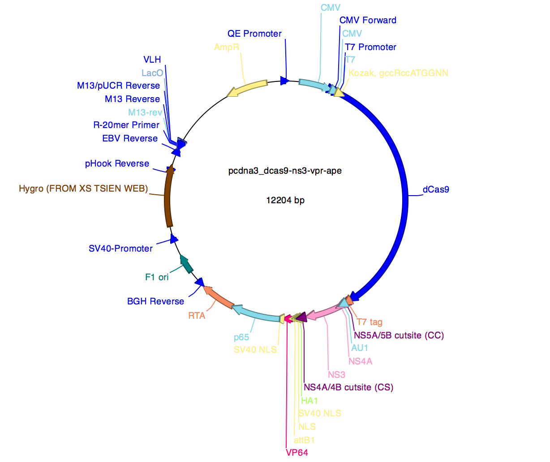 Addgene: dCas9-NS3-NLS/VPR