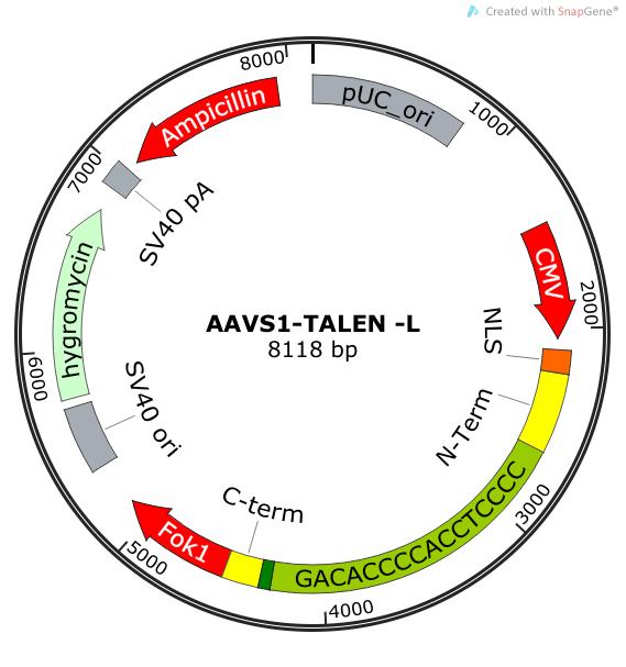 Addgene Aavs1 Talen L