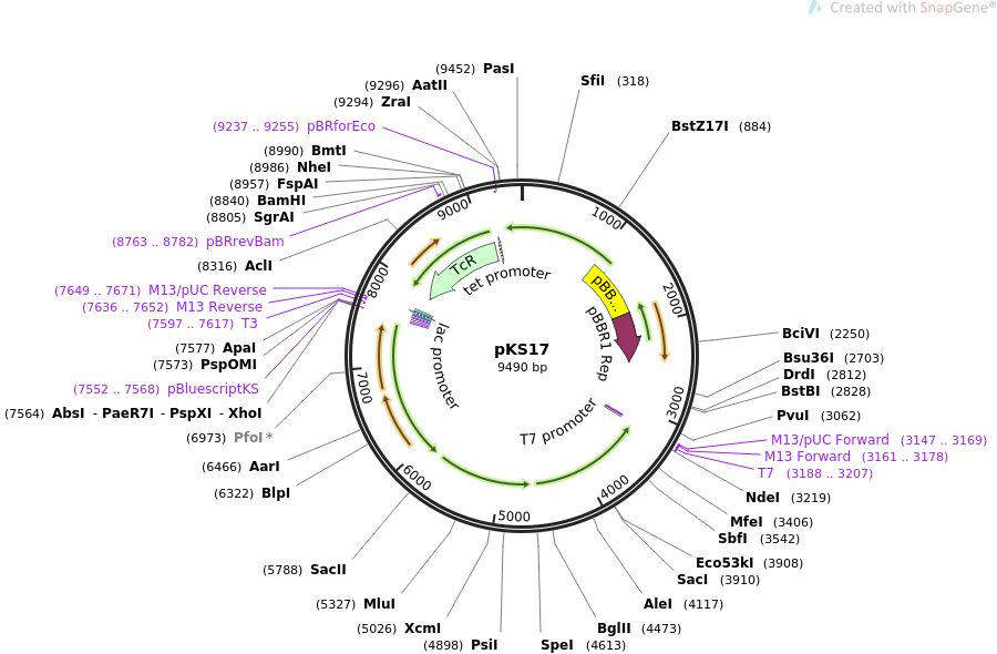 24628-plasmid-map-sequence-id-11466