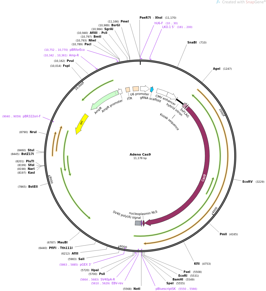 64072-plasmid-map-sequence-id-128234