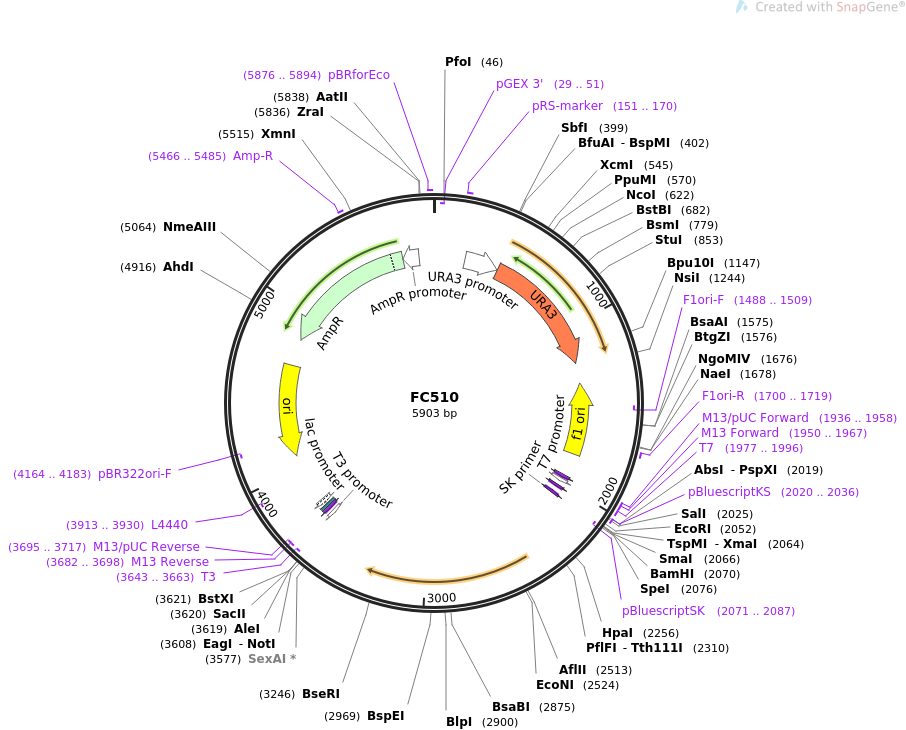 27329-plasmid-map-sequence-id-12877