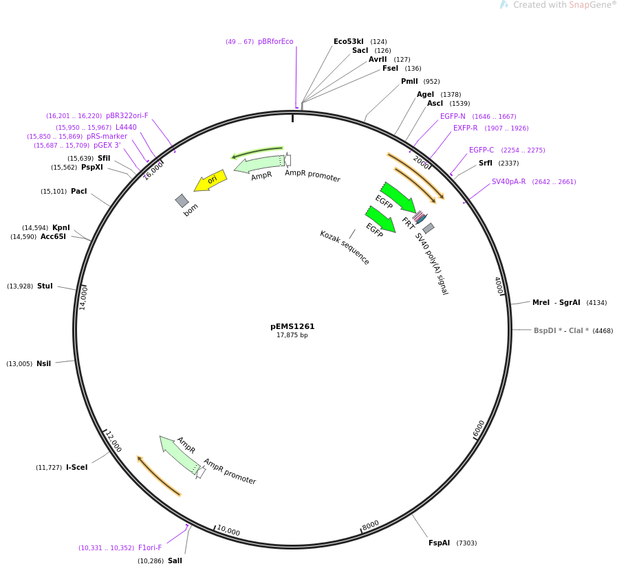 29133-plasmid-map-sequence-id-13548