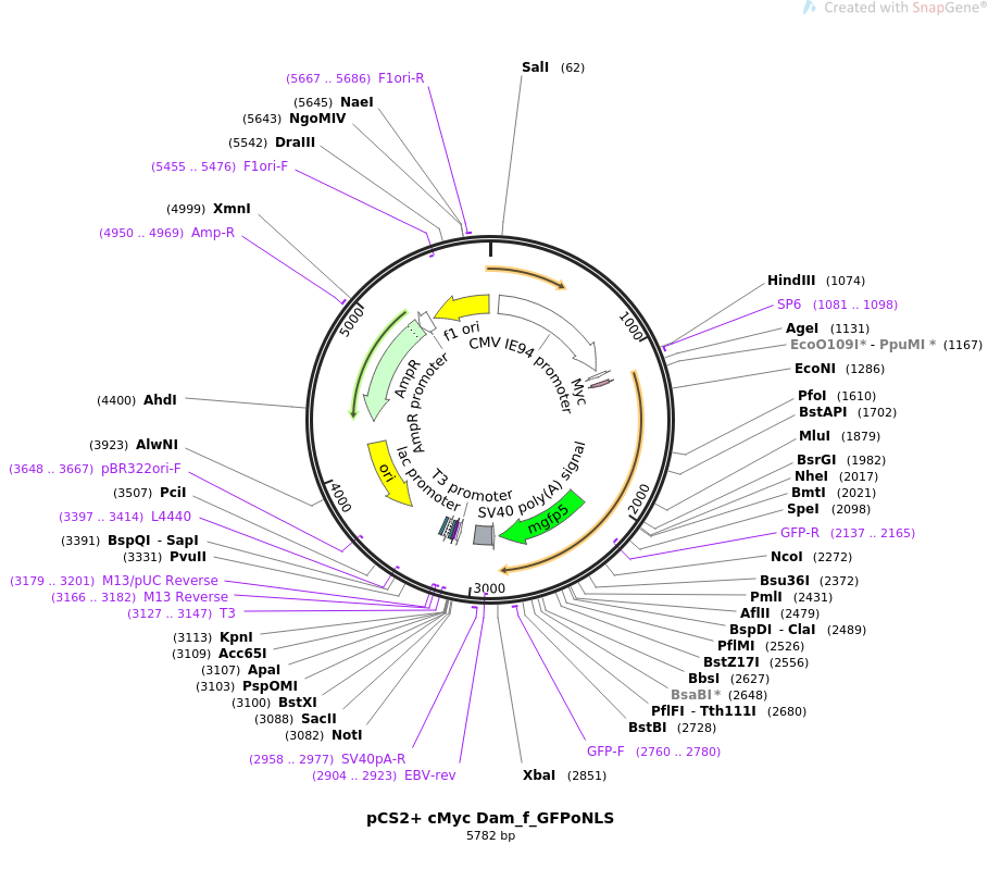 85820-plasmid-map-sequence-id-170474