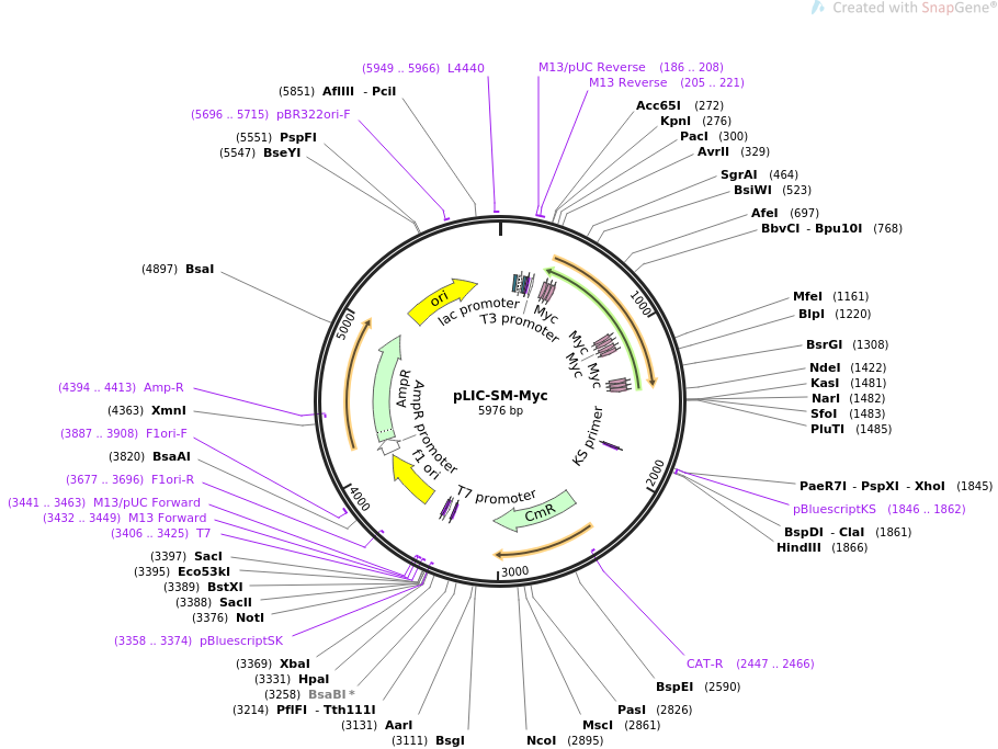 111189-plasmid-map-sequence-id-213065