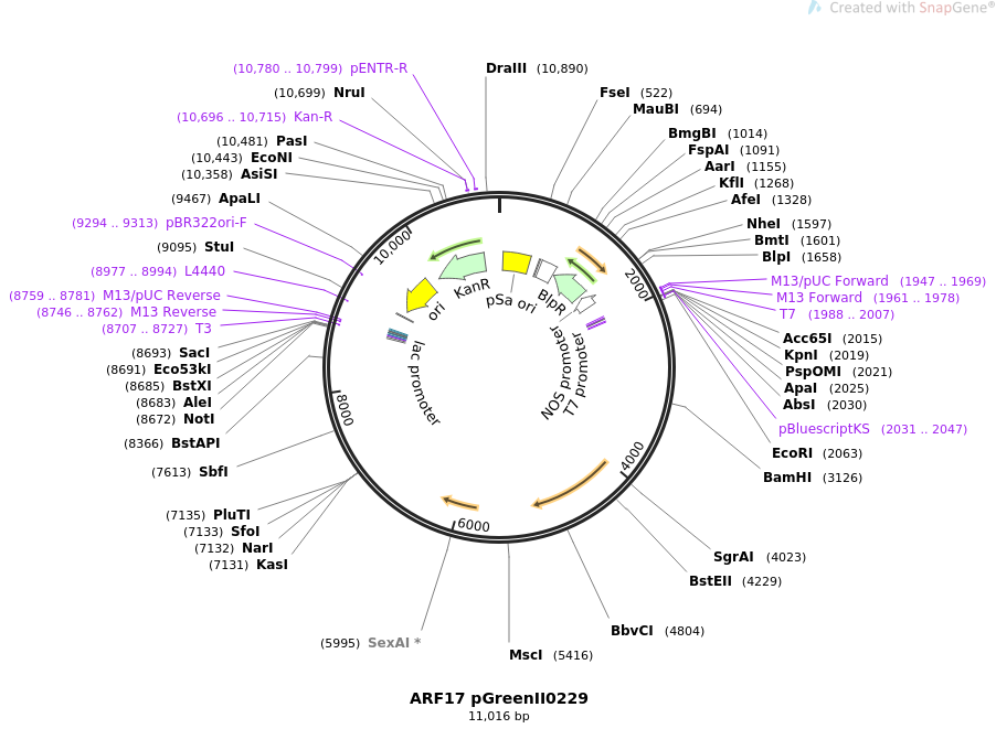 12070-plasmid-map-sequence-id-229827