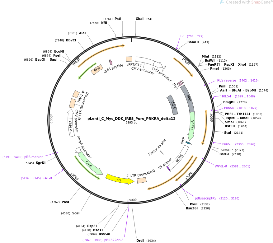 106116-plasmid-map-sequence-id-234791