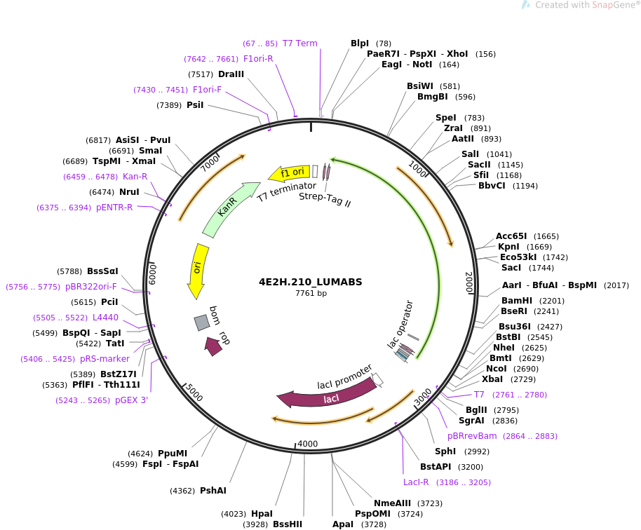 155209-plasmid-map-sequence-id-308006