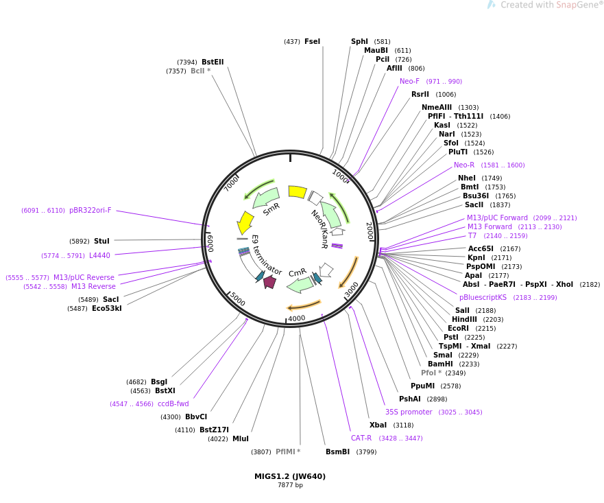 35246-plasmid-map-sequence-id-43053
