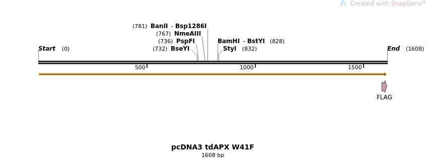 54080_map