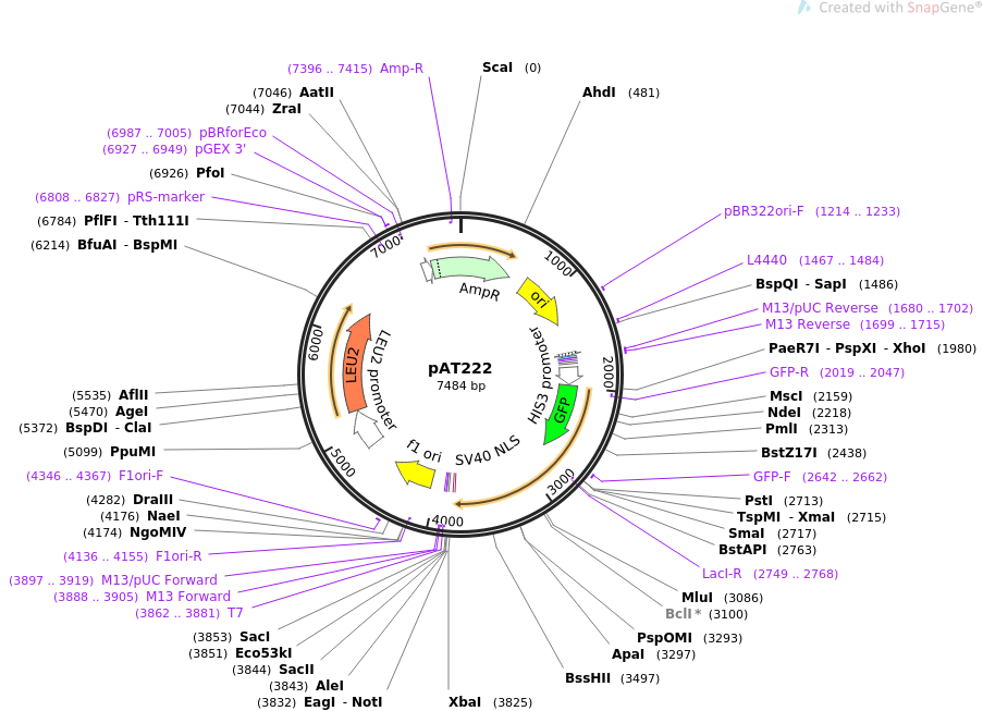 40942-plasmid-map-sequence-id-54252