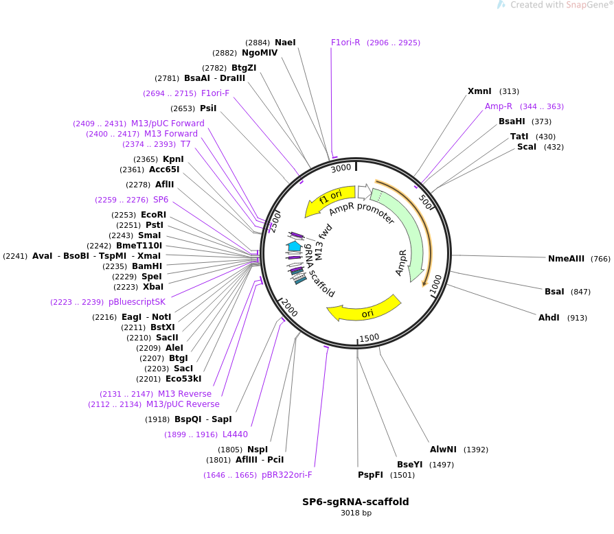 47912-plasmid-map-sequence-id-68534