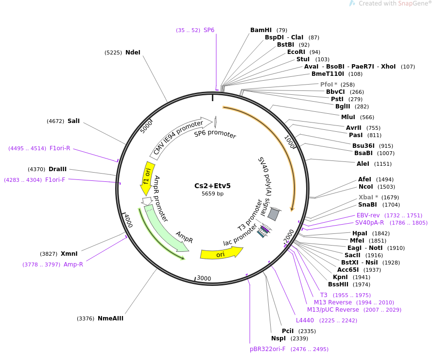 49095-plasmid-map-sequence-id-72292