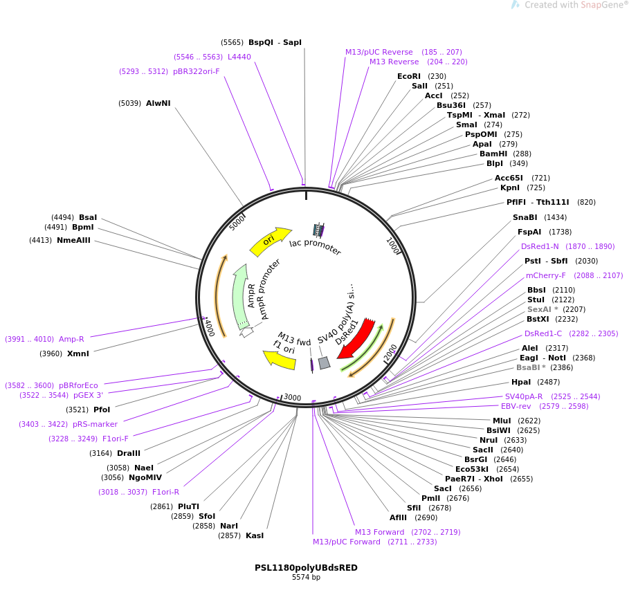 49327-plasmid-map-sequence-id-73022