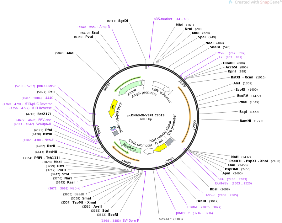 51882-plasmid-map-sequence-id-79845