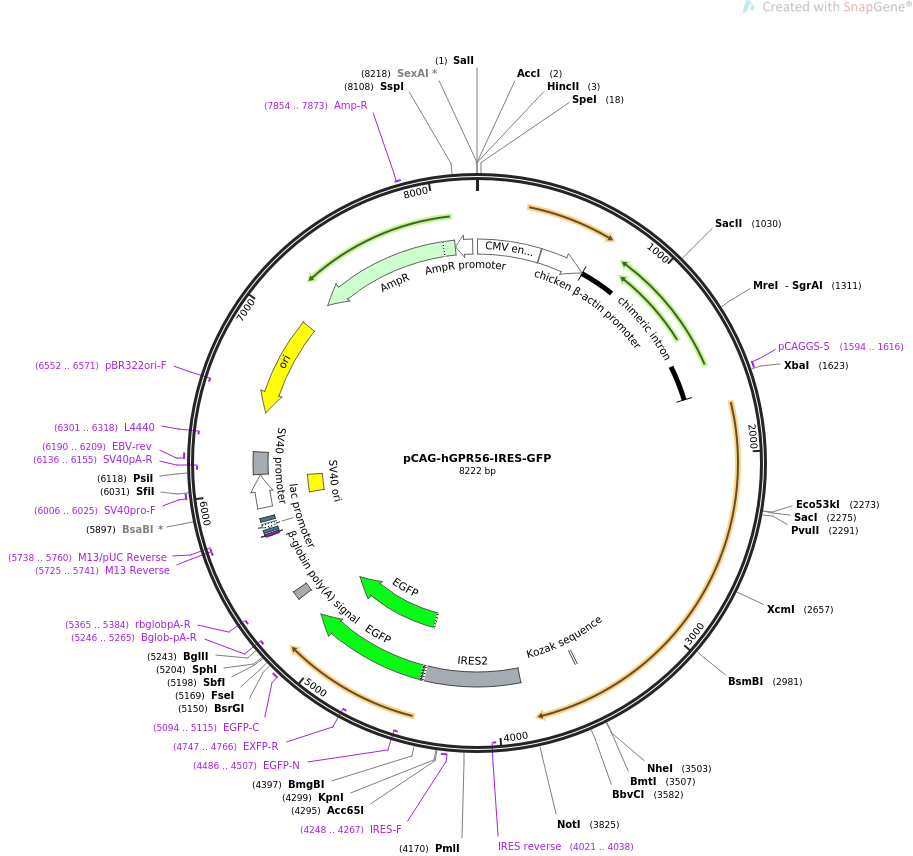 52297-plasmid-map-sequence-id-80941