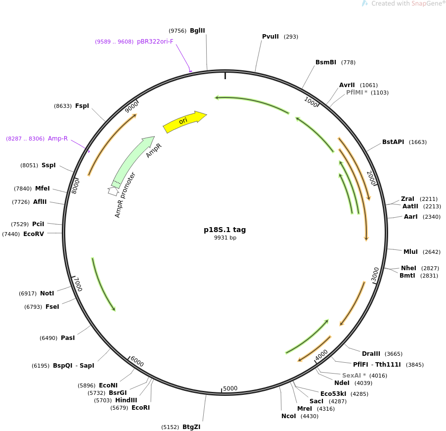 51729-plasmid-map-sequence-id-83024