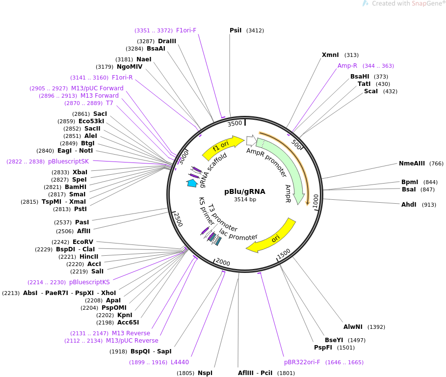 59188-plasmid-map-sequence-id-91770